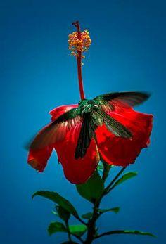 Viva Cuba, Cuban Culture, Country Of Origin, Roman, Memories, Architecture, Nature, Plants, Photography