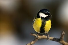 Bird photography is challenging. Here are some basic tips to help beginners take more successful photos of birds.