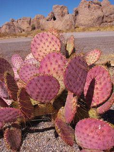 Pink Cactus at City of Rocks, New Mexico, by FeVa Fotos, via Flickr