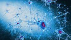 Representación gráfica de las neuronas del cerebro
