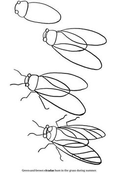 Fly Drawing, Painting & Drawing, How To Draw Bugs, How To Draw Insects, Learn To Draw, Drawing For Kids, Art For Kids, Teaching Art, Drawing Lessons