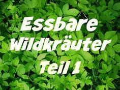 Essbare Wildkräuter – Teil 1 – die Wildkräuterfee