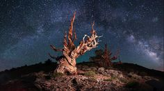 The Milky Way arch is captured at Bristlecone Pine Forest. (Sashikanth Chintla/2015 Sony World Photography Awards)