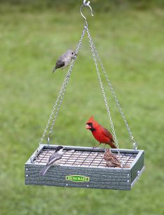 Duncraft.com: Duncraft EZ Clean Maximizer Platform Feeder: This platform feeder features a spectacular wire grid system that prevents any wasted seed, whether from birds flicking bits to the ground or by greedy squirrels. Squirrels will no longer be able to grab handfuls of seed, that's for sure.