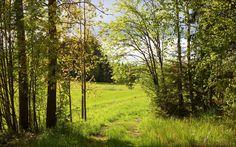 Naturaleza, verano, bosque, árboles, camino verde, soleado, wallpaper