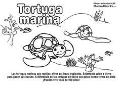 TORTUGA MARINA, pintas animales del mar, dibujos colorear