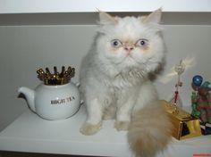 Adorable - http://cutecatshq.com/cats/adorable-3/