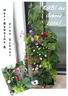KUBI des Jahres 2016! #KUBI #Hochbeet #2016 #Garten #Wettbewerb