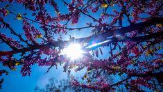 Καιρός: Έρχεται θερμή εισβολή με 30άρια Weather, Clouds, Outdoor, Outdoors, Outdoor Games, Weather Crafts, The Great Outdoors, Cloud