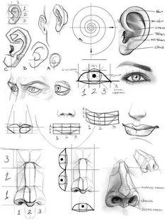 Anatomy Sketches, Anatomy Drawing, Anatomy Art, Drawing Heads, Painting & Drawing, Drawing Drawing, Drawing Faces, Drawing Tips, Pencil Art Drawings