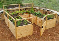 Veggie Patch--make the walls taller and add a screen roof, and it's chicken-proof!