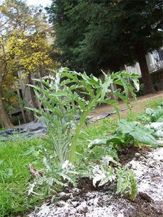 The uses for diatomaceous earth in the garden are great. Diatomaceous earth is a truly amazing all natural product that can help you grow a…