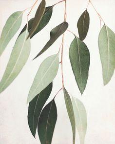 Eucalyptus Leaves Print, Nature Wall Art, Nature Photography, Modern Rustic Decor, Sage Green Wall A Leaf Photography, Minimal Photography, Abstract Photography, Artistic Photography, Photography Jobs, Photography Classes, Photography Equipment, Green Wall Art, White Wall Art
