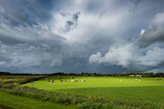 Een dreigende lucht boven Schiermonnikoog kondigt een zware bui aan. De koeien grazen rustig door en trekken zich hier niets van aan.