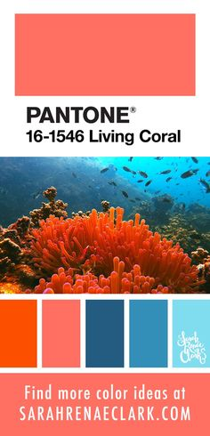 25 Color Palettes Inspired by Ocean Life and PANTONE Living Coral House Beautiful beautiful color of house Coral Color Schemes, Coral Colour Palette, Pantone Colour Palettes, Paint Color Palettes, Color Palate, Pantone Color, Ocean Colors, Bold Colors, Color Of The Year