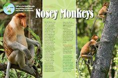 Proboscis Monkeys - National Wildlife Federation