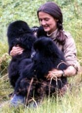 Dian Fossey- (January 16, 1932 – December 27, 1985) was an American zoologist who undertook an extensive study of gorilla groups over a period of 18 years. She studied them daily in the mountain forests of Rwanda, initially encouraged to work there by famous anthropologist Louis Leakey. She was murdered in 1985; the case remains open.