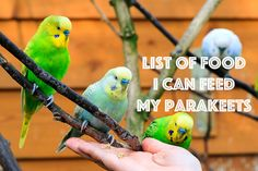 Tasty treats for your parakeet to eat! #parakeets