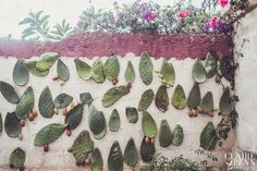 Such a cool idea! nails on the wall - push the fresh cacti through...can refresh whenever... Ostuni Workshop 2014 – wedding photography workshop in Puglia, Italy at Masseria Montenapoleone