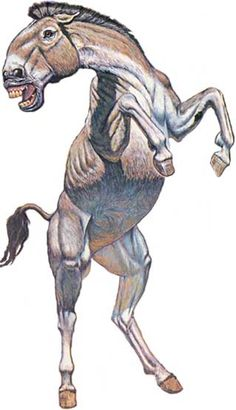 Onohippidium (Pleistocene, SouthAmerica). The hippidiform horses share synapomorphies with Pliohippus and they diversified in North America during the late Miocene prior to dispersal to South America before, or about, 2.5 myr ago, at the beginning of the Uquian (late Pliocene). Equus, which shares synapomorphies with North American Dinohippus, apparently was a later immigrant, first appearing in South America at the beginning of the Ensenadan (early Pleistocene), about 1.5 myr ago.
