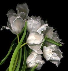 Floral photo by Magda Indigo