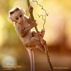Look at me, look at me! #MonkeyKingdom