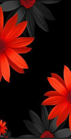 Flowers black background photography color splash 67 Ideas for 2019 Garden Wallpaper, Red Wallpaper, Colorful Wallpaper, Flower Wallpaper, Wallpaper Backgrounds, Wallpaper Desktop, Iphone Backgrounds, Valentines Day Wallpaper Phone Wallpapers, Unique Wallpaper
