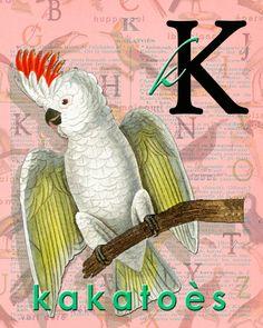 K for KAKATOÈS.Alphabet Ornithology Decor par BerniesArtPrints