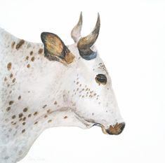 Nguni Portrait in Profile; Watercolour; 27x27cm. SOLD Watercolours, Watercolor Paintings, Moose Art, Wildlife, African, Profile, Birds, Portrait, Animals