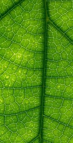 zielone soki warzywne zawierają dużą ilość chlorofilu