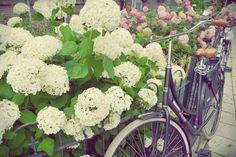 Flores & Bicicletas vintage