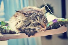 """Albie G having a nap"" #cat #sleeping #relax #Dubai #photography #fur #nap"