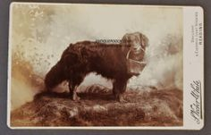 Antique Cabinet Dog with Basket Photograph | eBay