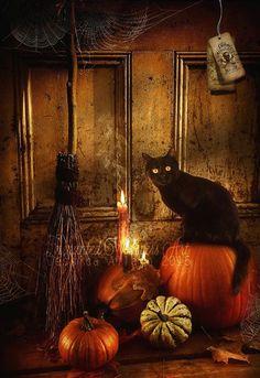 """thecatart: """" Halloween cat art,Halloween wall art,Halloween print,Black cat art,Witch art print,Halloween decor,black cat decor,Autumn art,Fall print cat pictures art """""""