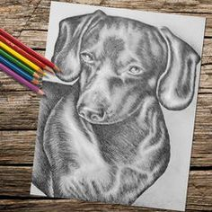 Coloring Page Pages Instant Download Dachshund Dog Adult Printable