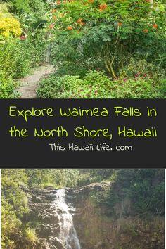 Explore Waimea Falls in the North Shore of Oahu - gorgeous botanical gardens, Hawaiian villages and a beautiful hike to a fantastic waterfall you can actually swim in. Waimea Falls is a fun day trip to do on the North Shore of Oahu