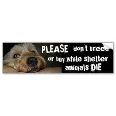 Please Dont Breed Or Buy While Shelter Animals Die Bumper Stickers - black labs & all black color dogs have a particular problem in being adopted cuz black dogs aren't the most popular.