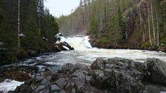 Jyrävä, Kitkajoki, Kuusamo, Oulangan kansallispuisto. 9 metrin putous, kevättulva, 14.5.2015, kuvan otti Arja Säkkinen