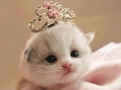 Baby Kitten with a Princess Tiara