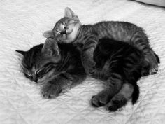 everyone needs someone to snuggle with