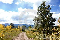 Photo about A small mountain dirt road bordered by young aspen trees starting to turn yellow and a ponderosa pine in the mountains of Colorado above Boulder. Image of rural, shadow, land - 79512148 Aspen Mountain, Pine Mountain, State Of Colorado, Aspen Trees, Bouldering, Beautiful Landscapes, Stock Photos, Mountains, Yellow