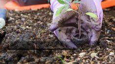 Make Stunning Mason Jar Solar Lights - Pachira Aquatica, Knockout Roses, Chlorophytum, Wood Ash, Powdery Mildew, Borscht, Inside Plants, Tree Stumps, Tree Care