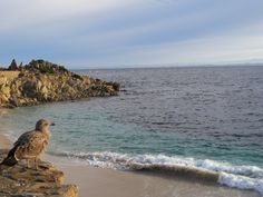 {Pacific Grove} Kendra Pearce - Tuesday Afternoon - Roadtrippin