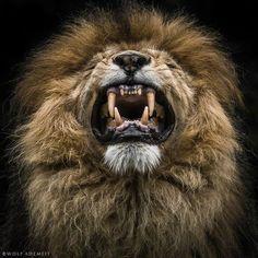 Photo loewenzahn by Wolf Ademeit on 500px