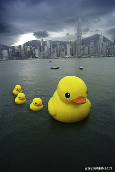 "HK Harbour - Rubber Duck Parade ((""Rubber Duck,"" a floating sculpture by Dutch artist Florentijn Hofman, has traveled the world's waterways. Photo Humour, Duck Wallpaper, Danbo, Mellow Yellow, Rubber Duck, Public Art, Installation Art, Around The Worlds, Kawaii"
