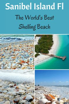Sanibel Island FL - The World's Best Shelling Beaches - Beach Bliss Living - Florida vacation outfits - Beach Vacation Tips, Florida Vacation, Florida Travel, Florida Beaches, Beach Trip, Vacation Spots, Travel Usa, Summer Beach, Florida Trips