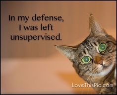 In my defense funny quotes quote funny quotes humor