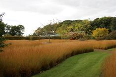 Scampston Hall Walled Garden in Malton, North Yorkshire, middle of October, designed by Piet Oudolf.  Drifts of Grass - Molinia caerulea ssp caerulea 'Poul Peterson'