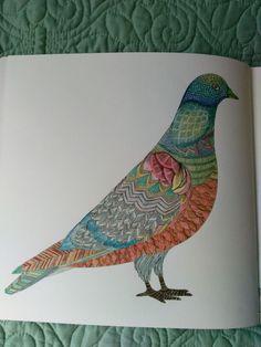 PencilsKM Pigeon Millie Marotta Animal Kingdom