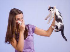 Kedi sahibi olmadan önce kedilere karşı bir alerjiniz olup olmadığınızı bilmekte fayda var. Belki de kediye karşı alerjiniz var, varsada korkmayın çözümleri yazımızda.